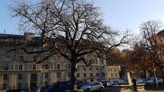 tree-in-bern
